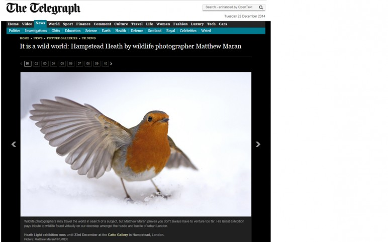 Hampstead Heath Gallery online and in print – The Telegraph