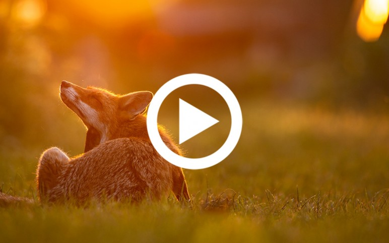 Shooting foxes, the Compassionate Way | Part One